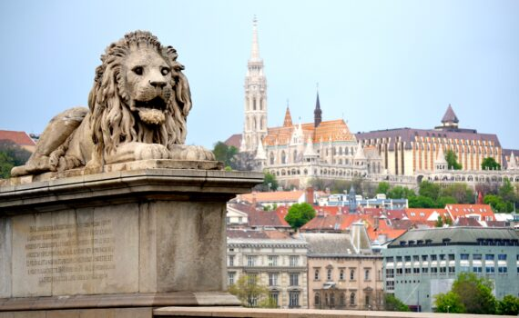 Lion on chain bridge in Budapest