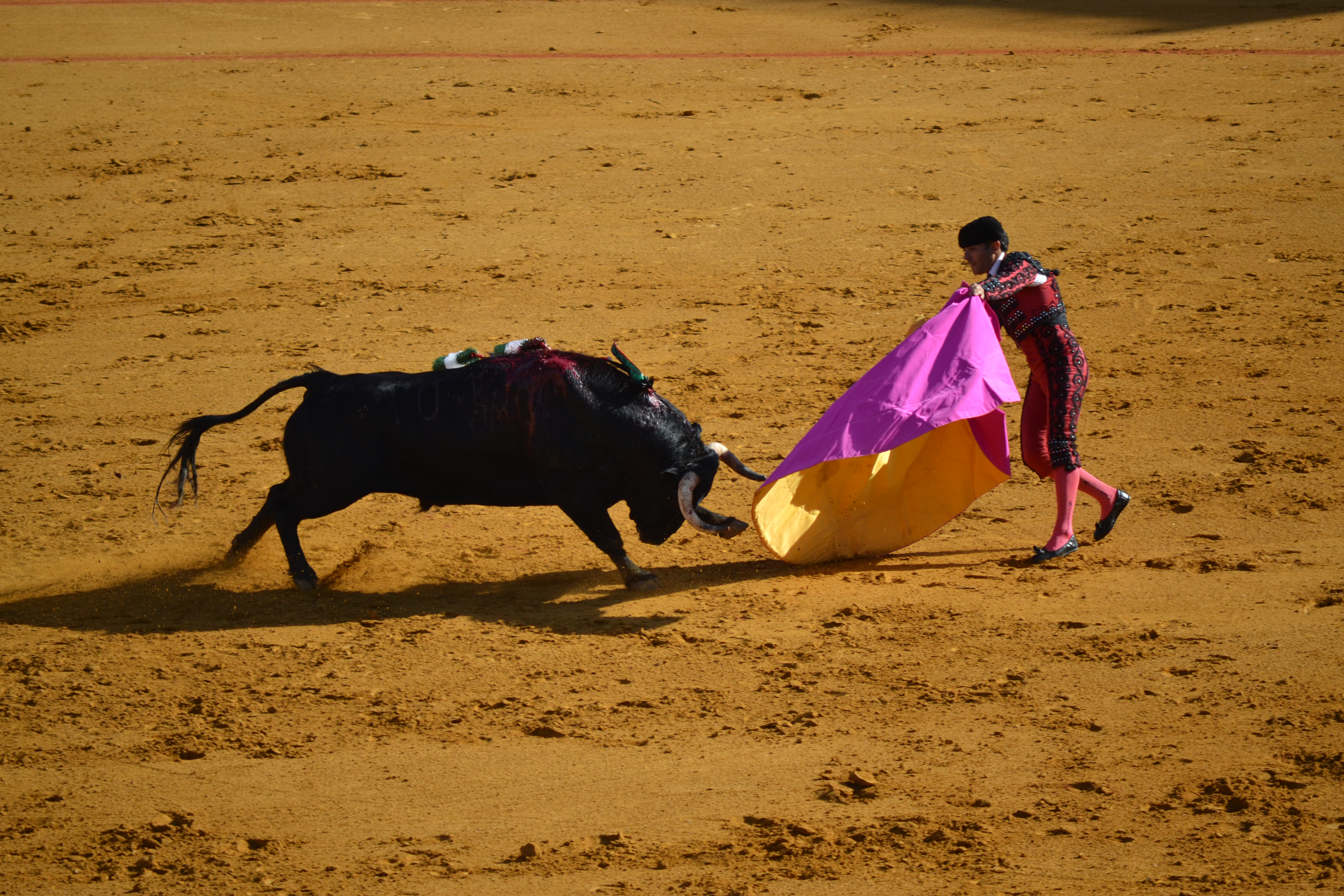 A bullfighter artfully dodges a bloodied bull in Sevilla